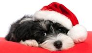 A quick Christmasplaylist