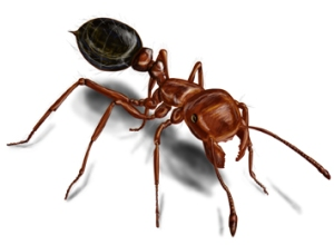 red-imported-fire-ant-illustration_355x261